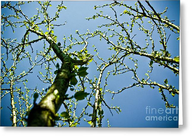 Macro Finalized Photographs Greeting Cards - Baby Spring Tree Leaves 02 Greeting Card by Ryan Kelly