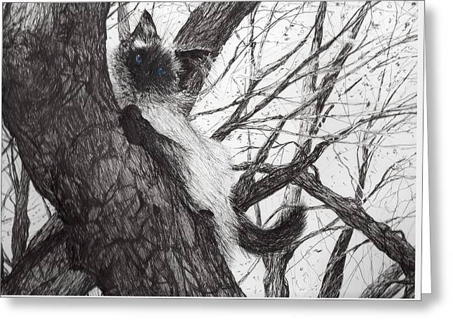 Cats Drawings Greeting Cards - Baby up the apple tree Greeting Card by Vincent Alexander Booth