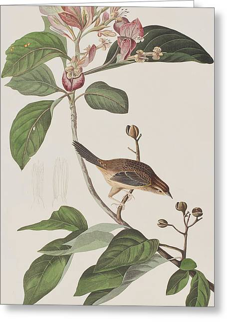Bachmans Sparrow Greeting Card by John James Audubon