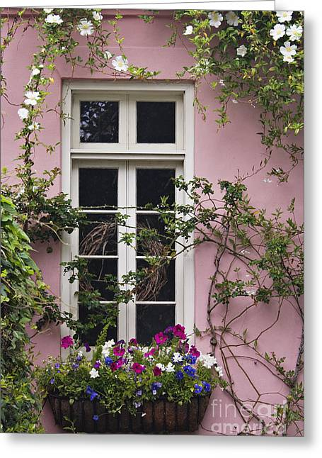 Petunia Greeting Cards - Back Alley Window Box - D001793 Greeting Card by Daniel Dempster