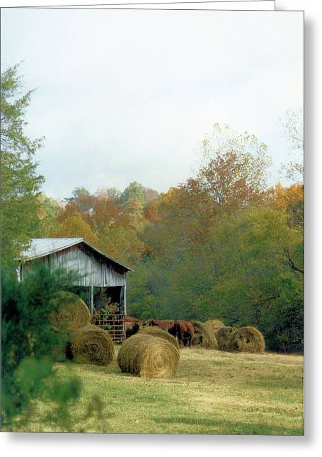 Tennessee Hay Bales Greeting Cards - Back At The Barn Greeting Card by Jan Amiss Photography