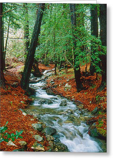 Coastal Forest Greeting Cards - Back Country Creek Greeting Card by Gary Brandes