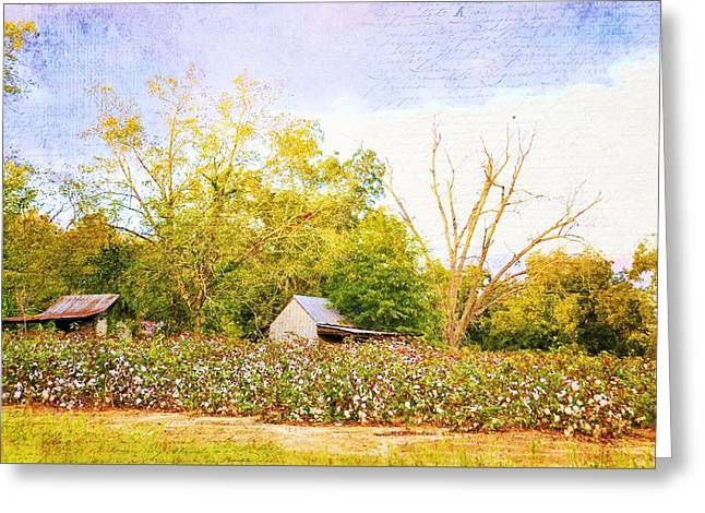 Georgia Cotton Fields Greeting Cards - Back Forty Cotton Field Greeting Card by Jan Amiss Photography