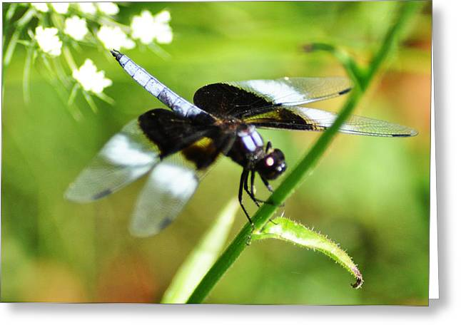 Back In Black - Black Dragonfly Greeting Card by Bill Cannon