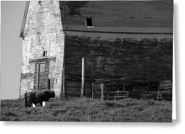 Old Maine Barns Greeting Cards - Back in Time Greeting Card by William Tasker