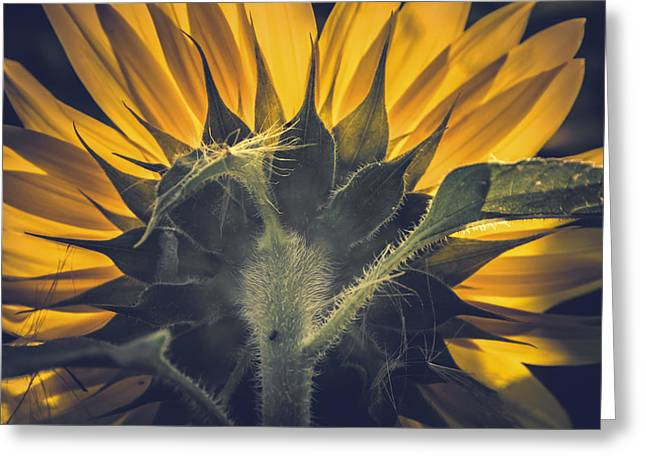 Back Lit Greeting Cards - Back lit and back facing Greeting Card by Chris Fletcher
