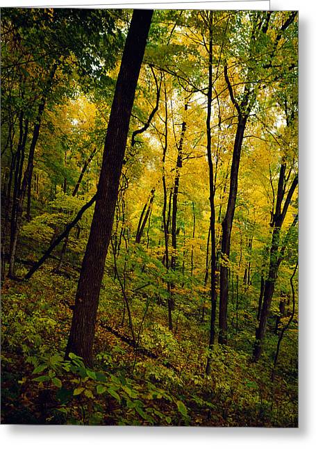 Wisconsin State Parks Greeting Cards - Back Lit Autumn Color Trees Along Sugar Greeting Card by Panoramic Images