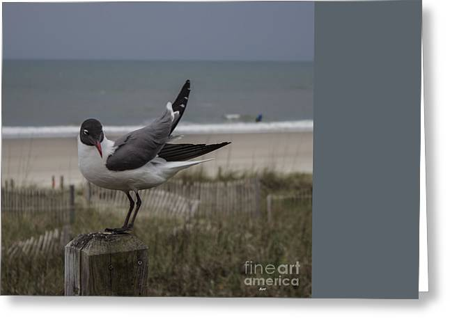 Beach Photos Greeting Cards - Back Off Greeting Card by Roberta Byram