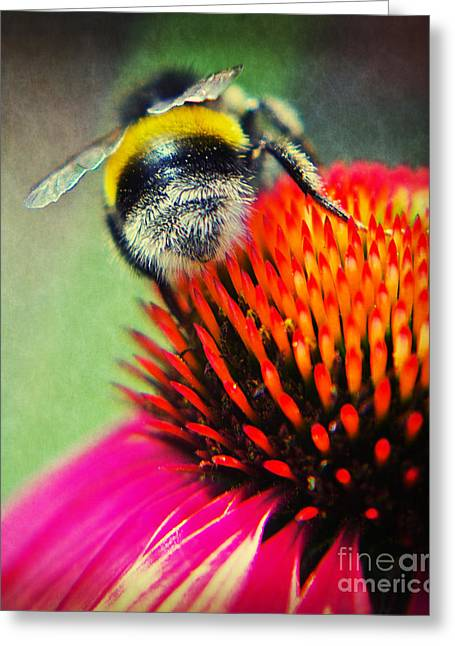 Macro Mixed Media Greeting Cards - Back Side - Bumble bee Greeting Card by Angela Doelling AD DESIGN Photo and PhotoArt