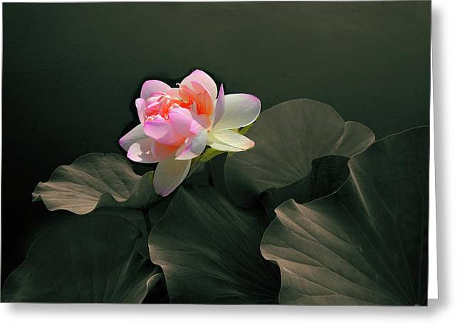 Backlit Lotus Greeting Card by Jessica Jenney