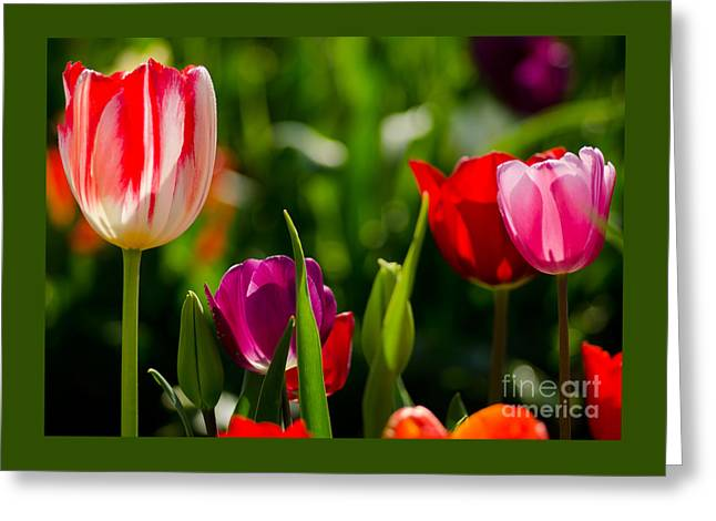Exposure Greeting Cards - Backlit  Greeting Card by Nick  Boren