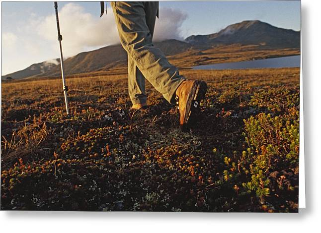 Backpacker Hikes Across Tundra In Logan Greeting Card by Gordon Wiltsie