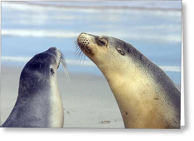 Sea Lions Greeting Cards - Backtalk Greeting Card by Mike  Dawson