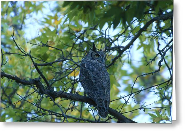 Backward Glance - Great-horned Owl - San Rafael Wilderness Greeting Card by Soli Deo Gloria Wilderness And Wildlife Photography