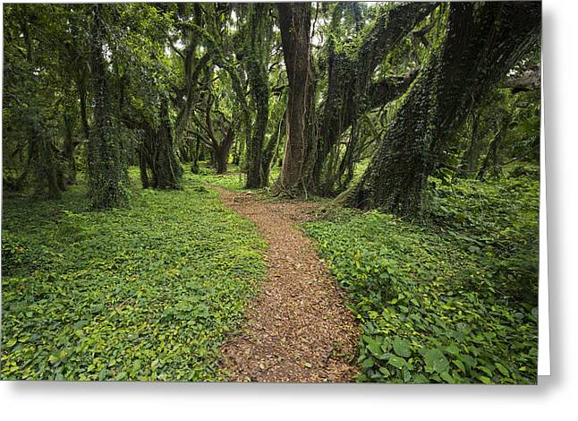 Original Photographs Greeting Cards - Backwoods Path Greeting Card by Jon Glaser