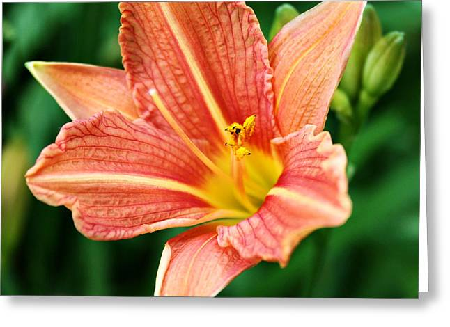 Decor Photography Greeting Cards - Backyard Beauty Greeting Card by Cathie Tyler