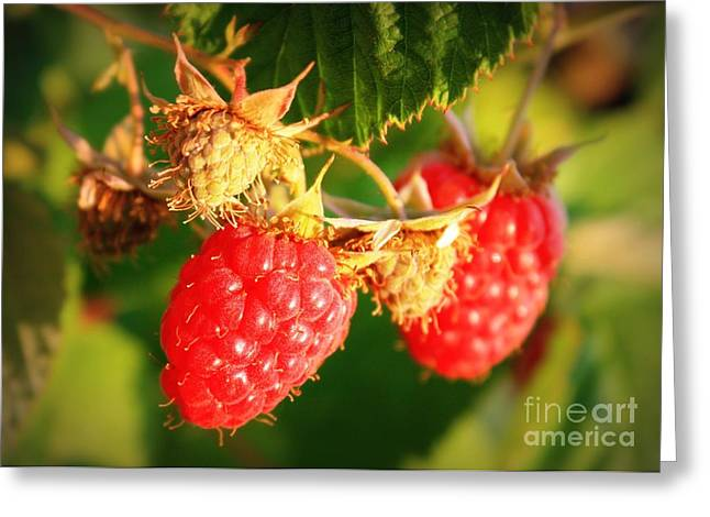 Fruit On The Vine Greeting Cards - Backyard Garden Series - Two Ripe Raspberries Greeting Card by Carol Groenen