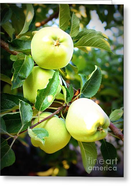 Fruit On The Vine Greeting Cards - Backyard Garden Series- Golden Delicious Apples Greeting Card by Carol Groenen