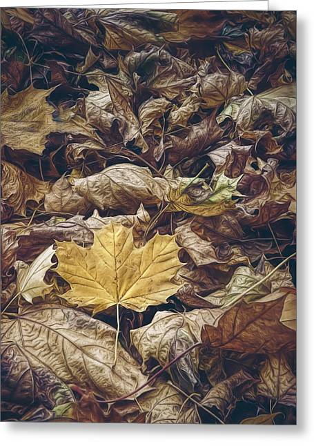 Backyard Leaves Greeting Card by Scott Norris