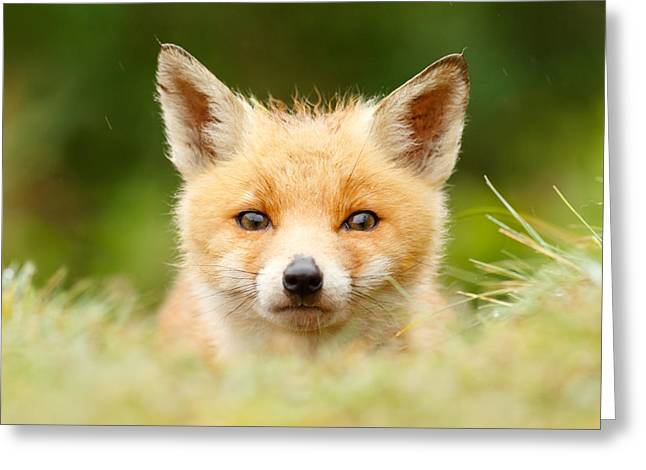 Red Fox Pup Greeting Cards - Bad Fur Day - Fox cub Greeting Card by Roeselien Raimond
