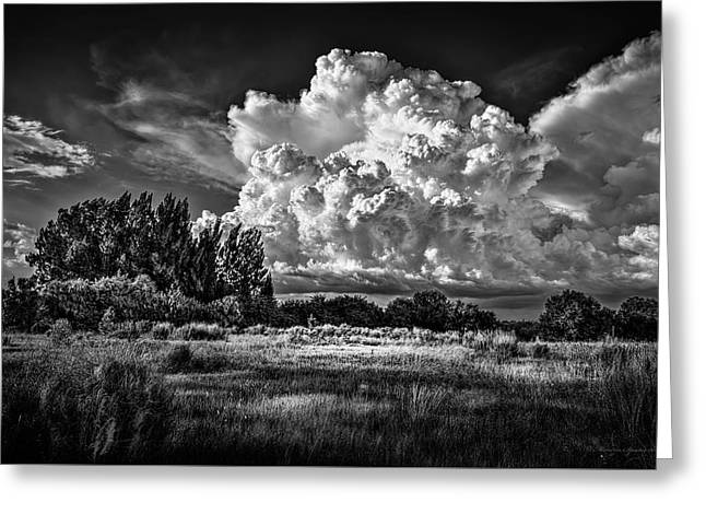Bad Weather B/w Greeting Card by Marvin Spates