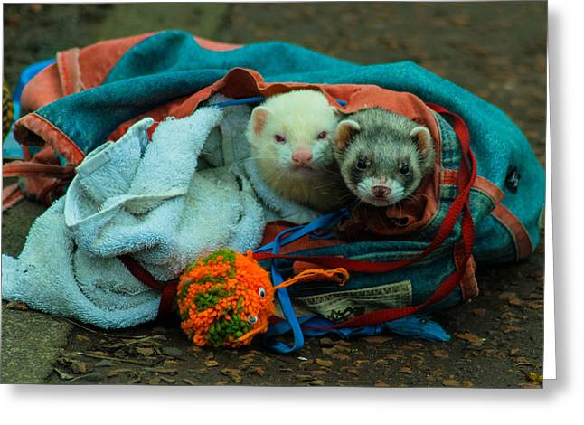 Bag Of Ferrets Greeting Card by Andy Blakey