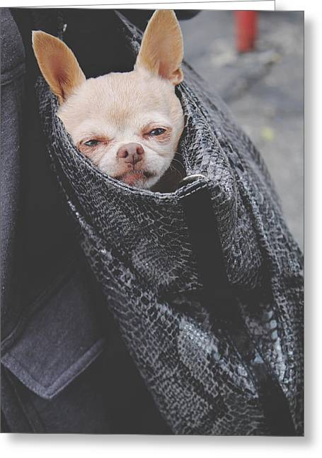 Small Dogs Greeting Cards - Bagged Greeting Card by Laurie Search