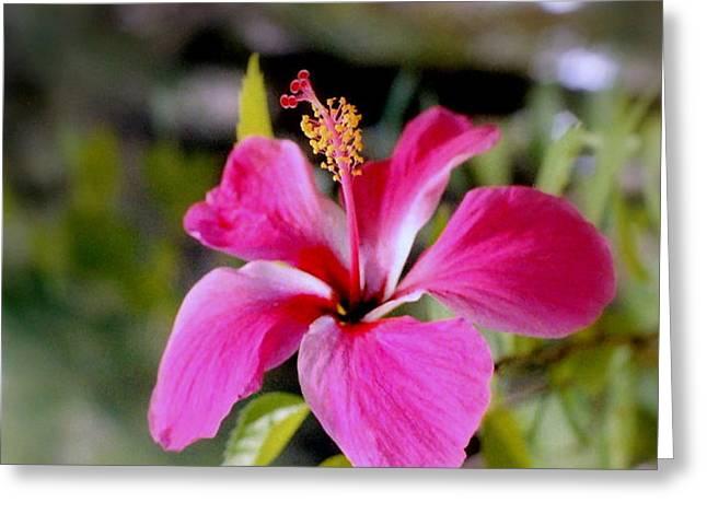 Bahamian Flower Greeting Card by Deborah  Crew-Johnson