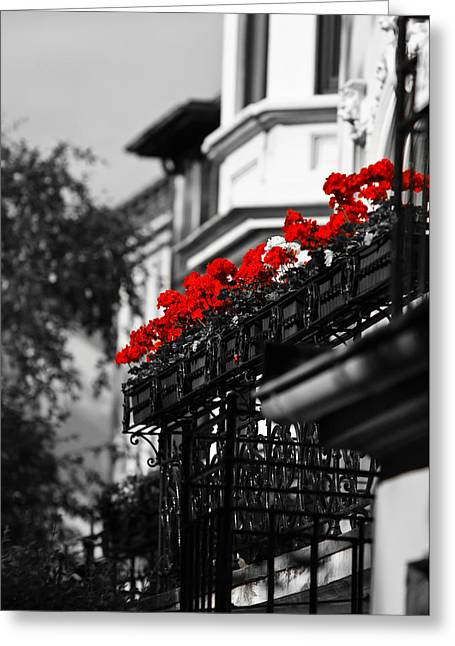 Rose Red City Greeting Cards - Balcony Roses Greeting Card by Edward Myers