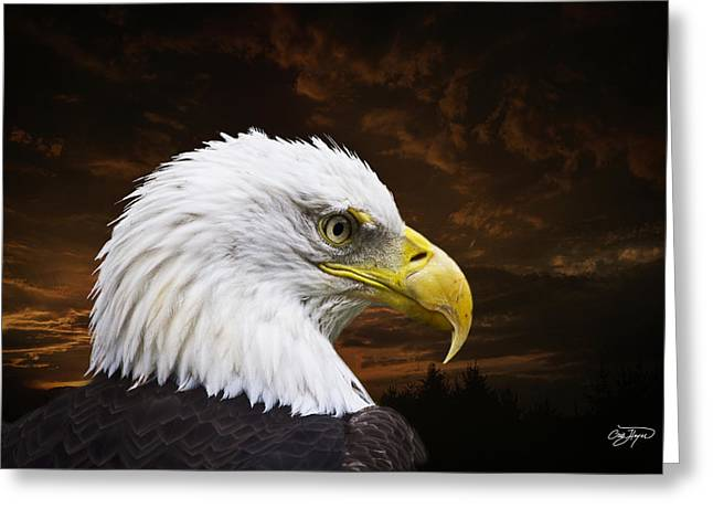 Greeting Cards - Bald Eagle - Freedom and Hope - Artist Cris Hayes Greeting Card by Cris Hayes