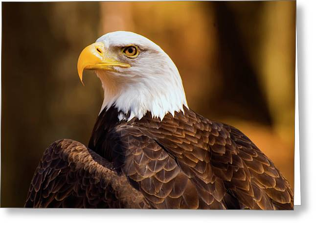 Bald Eagle 2 Greeting Card by Chris Flees