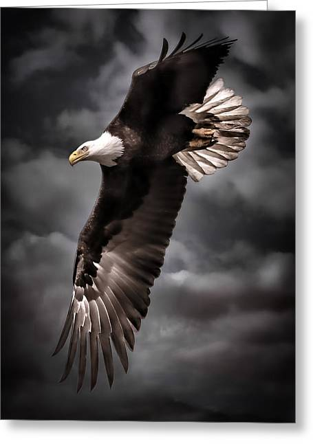 Killer B Photographs Greeting Cards - Bald Eagle At Dusk D3876 Greeting Card by Wes and Dotty Weber