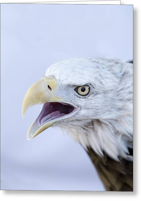 Talking Pyrography Greeting Cards - Bald Eagle Greeting Card by Ilze Lucero