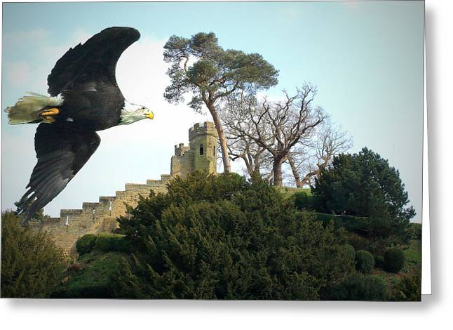 Warwick Digital Greeting Cards - Bald Eagle Greeting Card by Nick Eagles