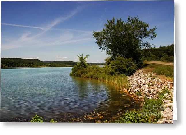 The Nature Center Greeting Cards - Bald Eagle State Park Greeting Card by Tom Gari Gallery-Three-Photography