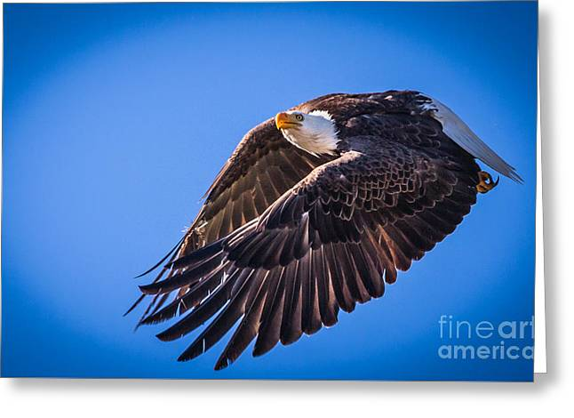 Snow Capped Greeting Cards - Bald Eagle Take Off Greeting Card by Webb Canepa