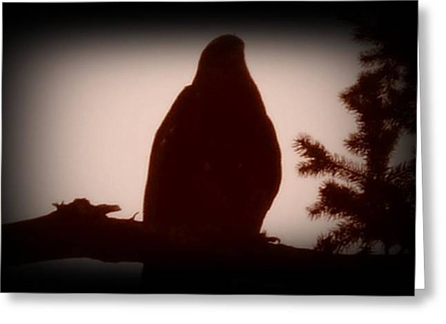 Washingotn Greeting Cards - Bald Eagle Twilight Greeting Card by Dawna Raven Sky