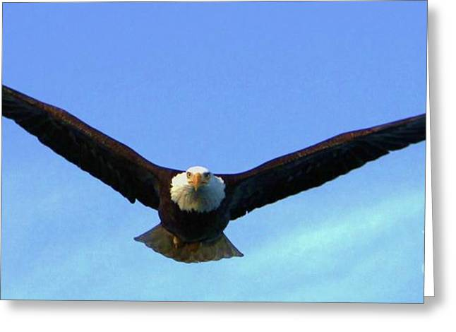 Portray Greeting Cards - Bald Eagle Victory Greeting Card by Dean Edwards