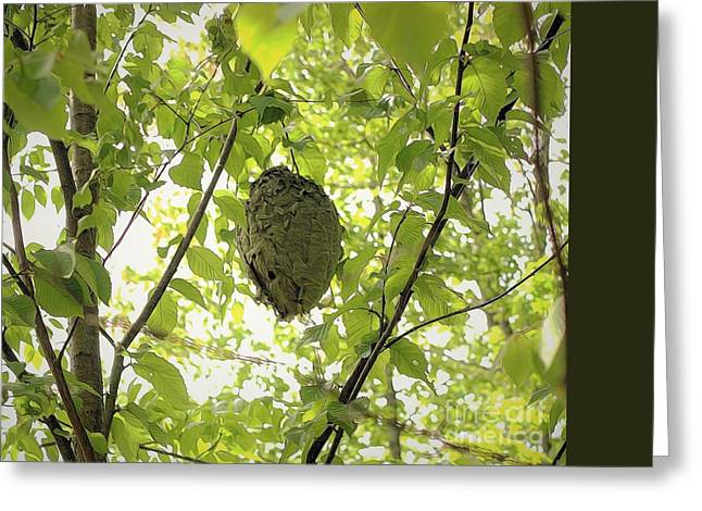 Bald-faced Hornets Nest Greeting Card by Patti Whitten