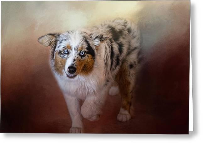 Puppies Photographs Greeting Cards - Ball of Energy - Australian Shepherd Greeting Card by Jai Johnson