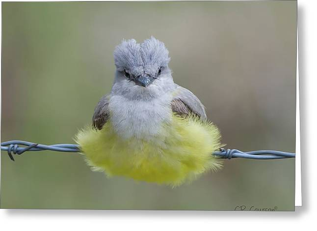 Courson Greeting Cards - Ball of Fluff Greeting Card by CR  Courson