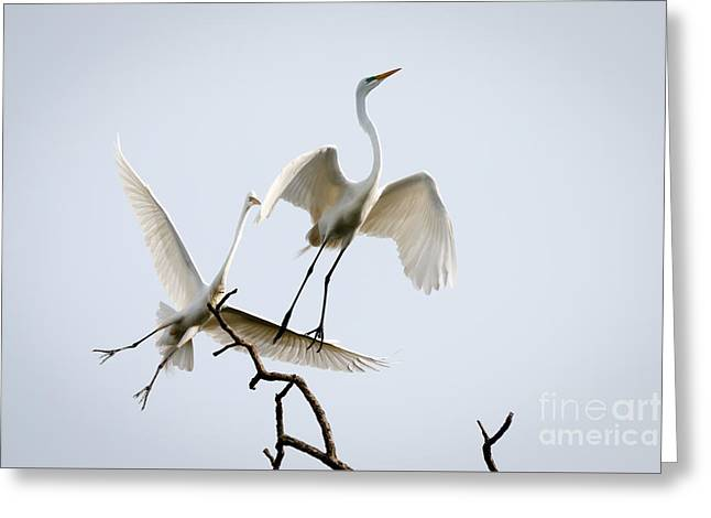 Flying Animal Greeting Cards - Sky Dance Greeting Card by Richard Smith