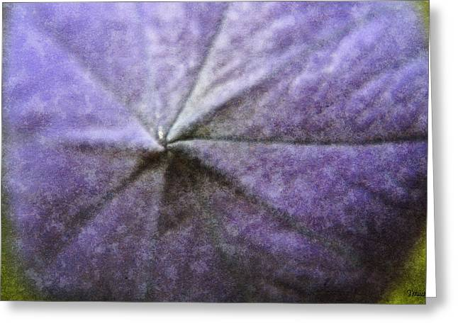 Platycodon Greeting Cards - Balloon Flower Greeting Card by Teresa Mucha