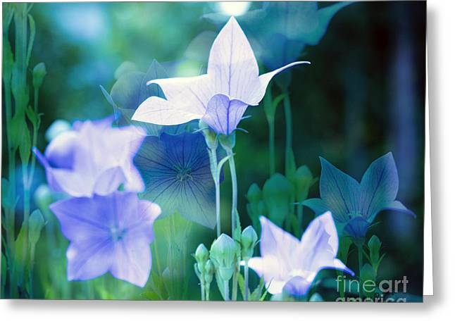 Les Fleurs Greeting Cards - Baloon Flowers Greeting Card by Linda Troski