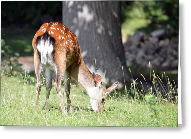 Bambi Greeting Card by Sharon Lisa Clarke