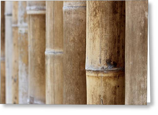 Fitting Room Greeting Cards - Bamboo 2 Greeting Card by Heike Hultsch