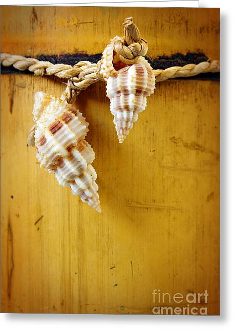 Conch Greeting Cards - Bamboo And Conches Greeting Card by Carlos Caetano