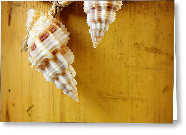 bamboo and conches Greeting Card by Carlos Caetano