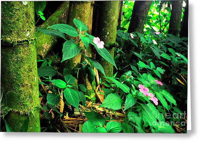 Yunque Greeting Cards - Bamboo and Impatiens El Yunque National Forest Greeting Card by Thomas R Fletcher