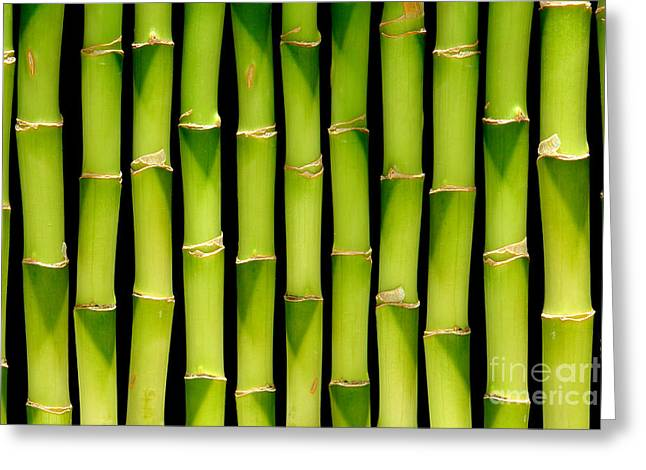 Perennial Greeting Cards - Bamboo Bamboo Bamboo Greeting Card by Olivier Le Queinec